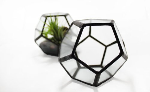 Glimpse Glass terrarium